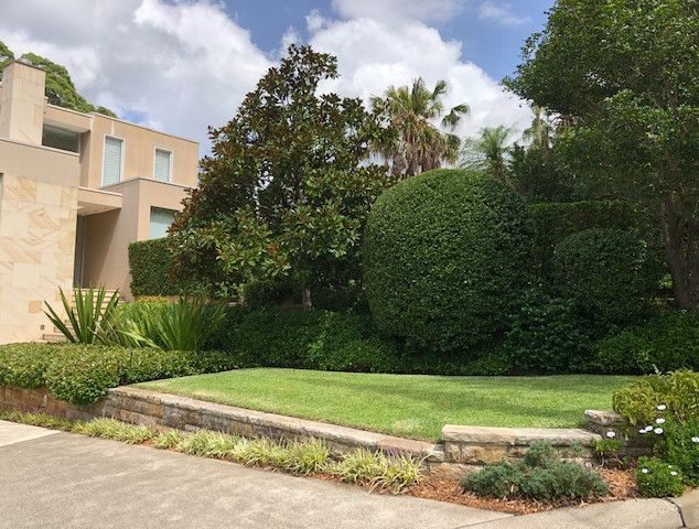 Cammeray Hedging