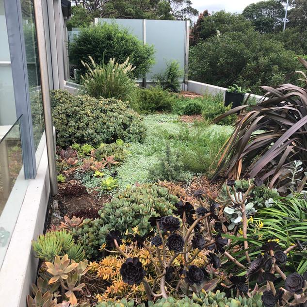 Native & Succulent Gardening