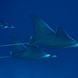 LLIR Underwater 5.jpg