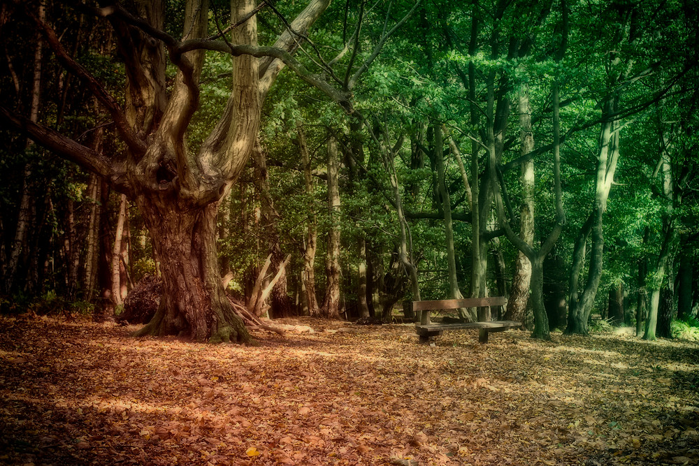 woodland fantasy series