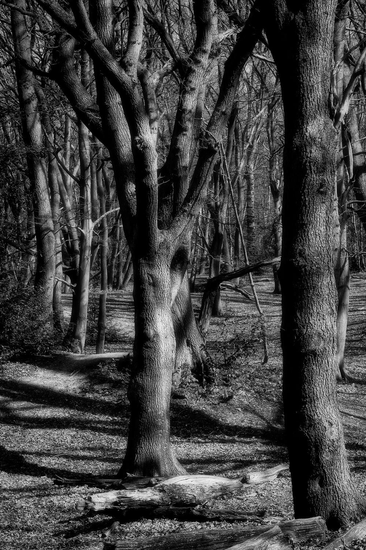 Woodland mono light and shade