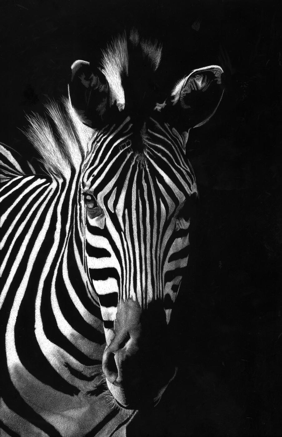 Striped Beauty1