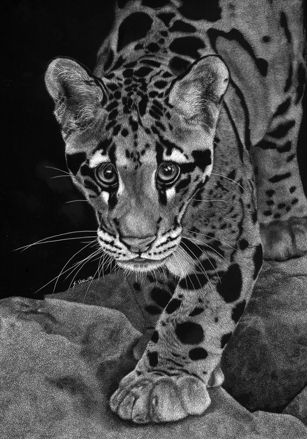 Yim - The Clouded Leopard 150dpi