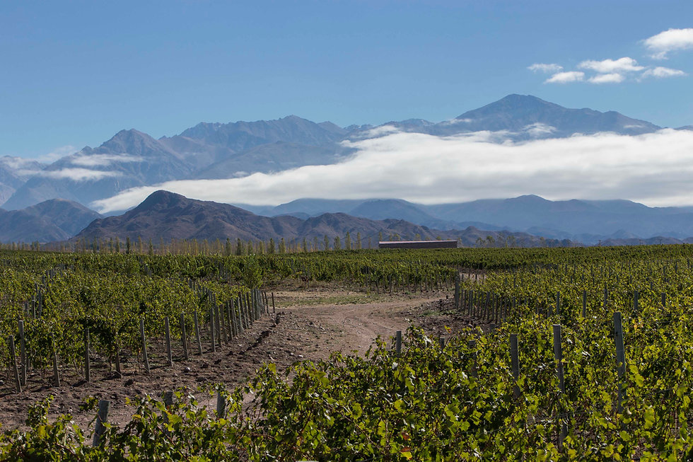Alpasion_wine_lodge_vineyards_2018_reuni