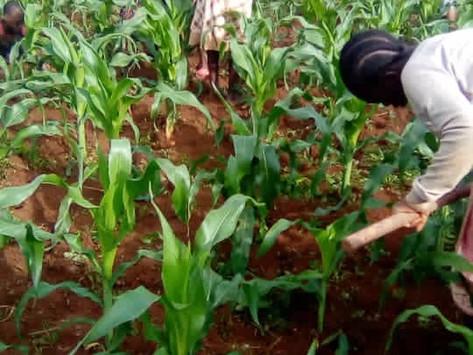 Eigen voedsel verbouwen