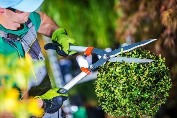 gardening & maintance