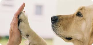 Dog and owner high-five