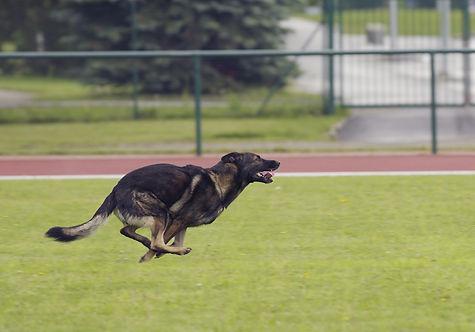 psie sporty