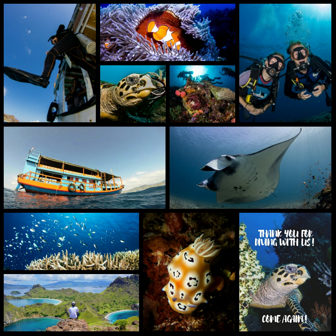 Come and Dive with us!