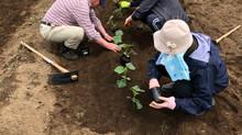 「ぺっこファーム」の苗植えを行いました