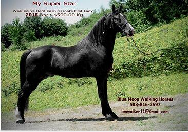 SuperStar062015StandAad2018.jpg