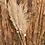 Thumbnail: Tall Natural Pampas per stem