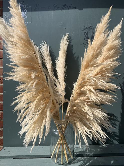 White Fluffy Pampas - per stem
