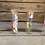 Thumbnail: Dried flowers in test tubes