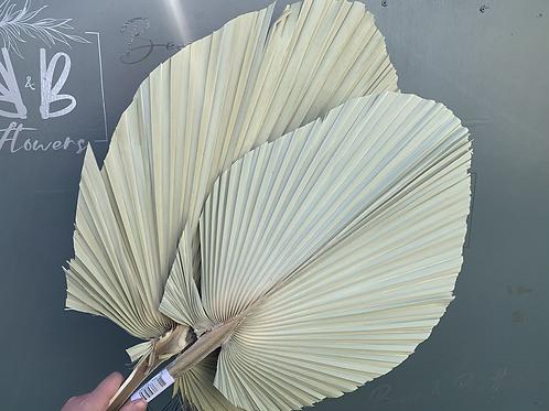 Large Sage Palm Spear
