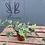 Thumbnail: Small Ivy Plant