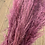 Thumbnail: Purple Pampas - per stem