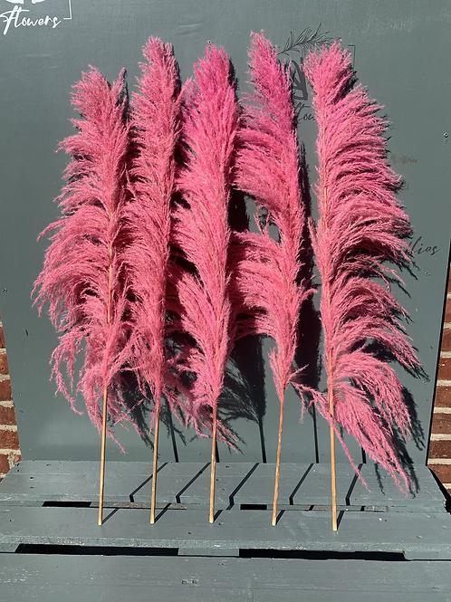 Fuchsia Pampas - per stem