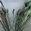 Thumbnail: Peacock feather - per stem