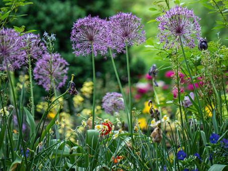 Månadens trädgårdstips - Juni
