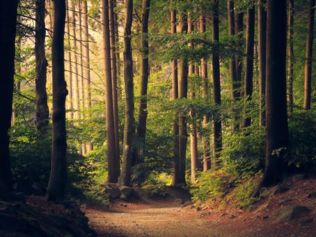 7 iemesli, kāpēc cilvēkiem patīk daba