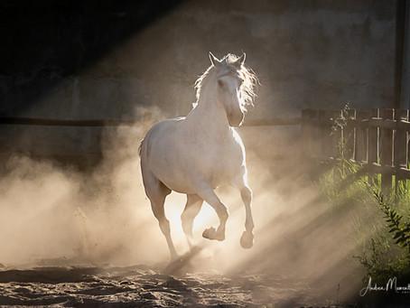 Pferdetheater - Pferdepoesie