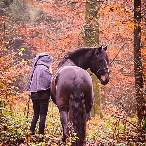 *Herói* & Sina im Herbstwald...