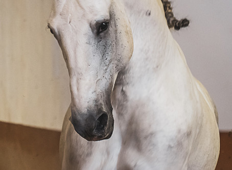 Wenn die Pferde dürfen, schenken sie einem einen Blick in die Seele...
