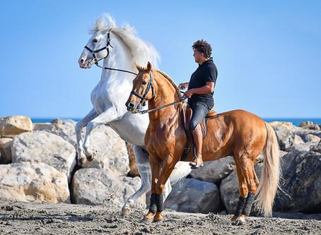 Fête du cheval                                           à Saintes Maries de la Mer