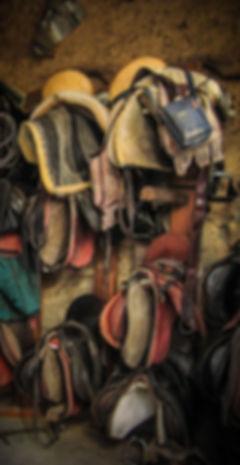Rutas a caballo en Gredos, Ávila y otras regiones de España