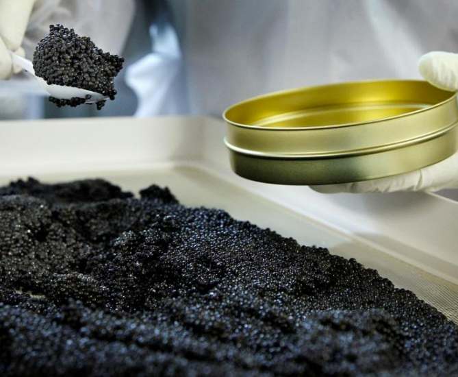 Caviar Osetr.png