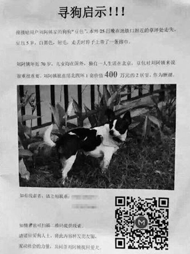 Woman-offers-her-own-house-as-reward-for-missing-dog.jpg