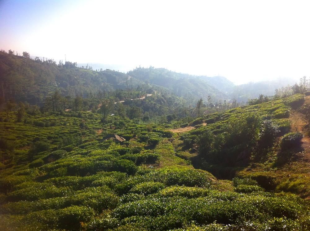 Hill Country Ceylon