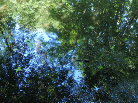 """""""At Blackwater Pond"""", by Mary Oliver"""