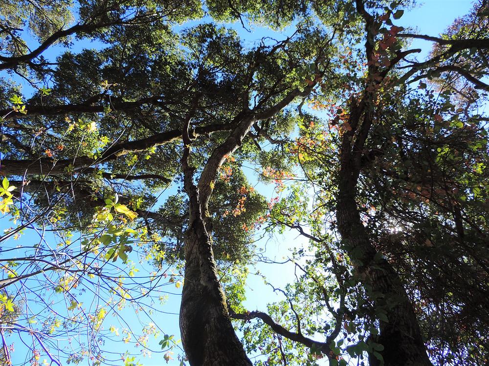 trees susanaprana