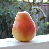 susanaprana pear