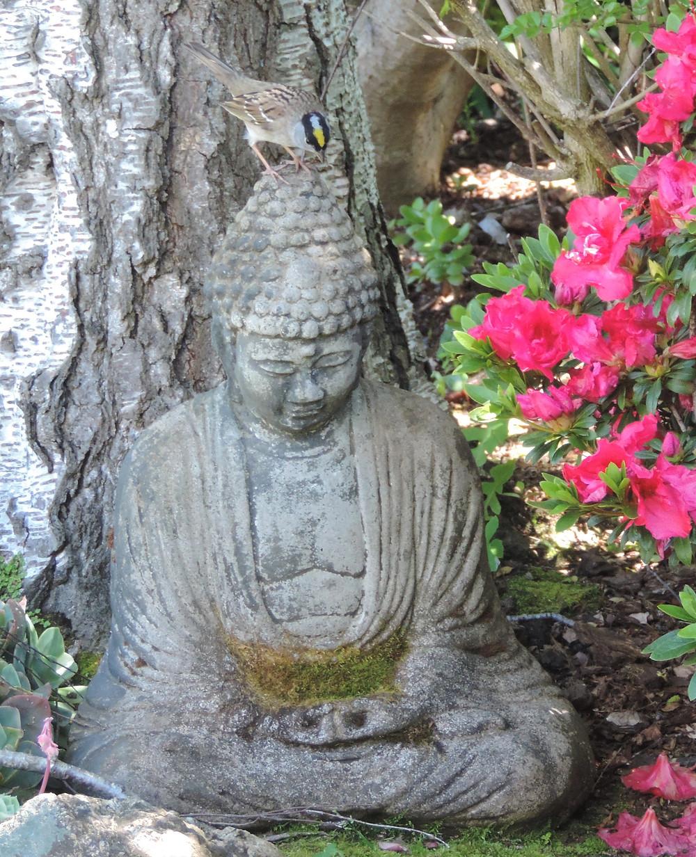 Buddha & Sparrow