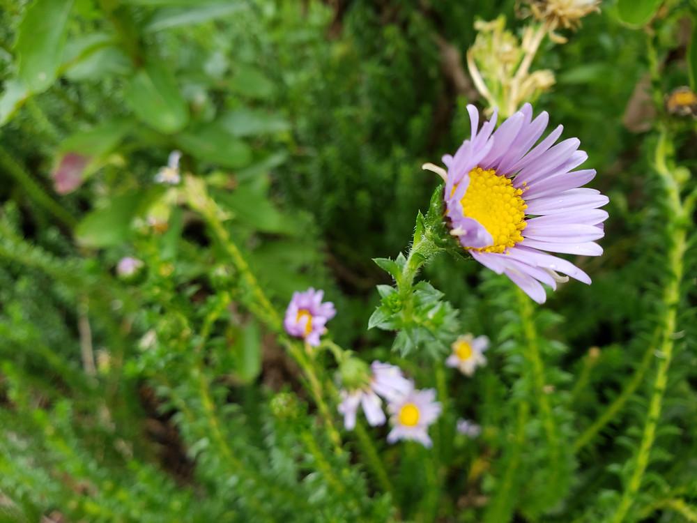 Flower Gratitude