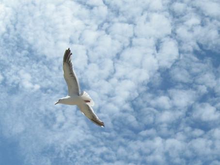 """Birdwings"" by Jalaluddin Rumi"