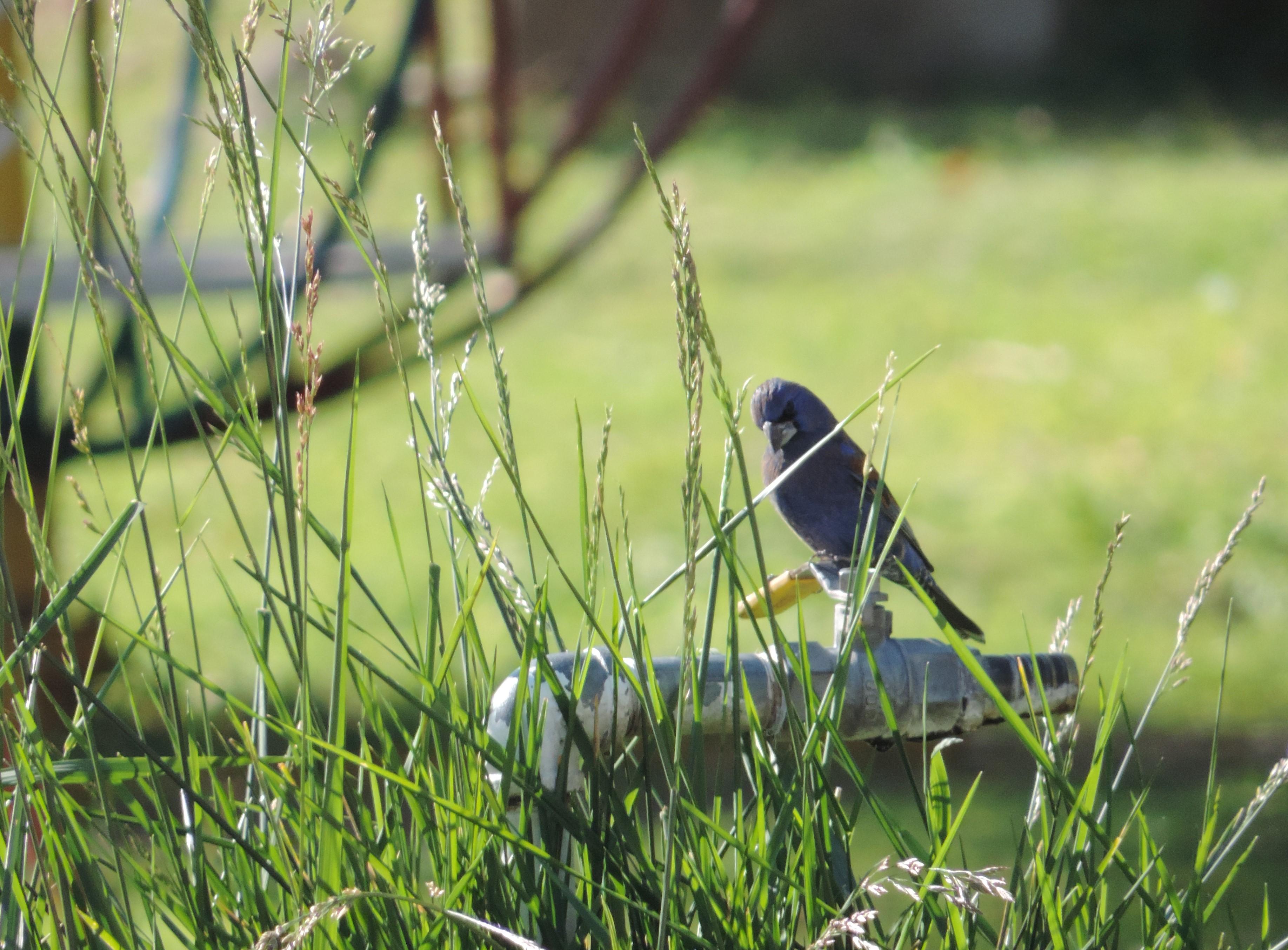 Bird Watching at Purisima