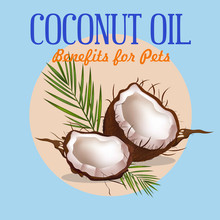 Mark's Guide to The Benefits of Coconut Oil for Pets