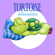 Mark's Guide to Tortoise Care & Hibernation