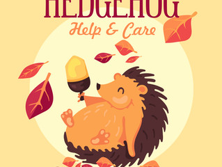 Mark's Guide to Hedgehog Help & Care
