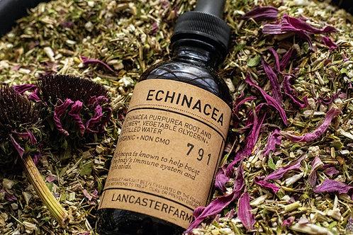 Echinacea Glycerite