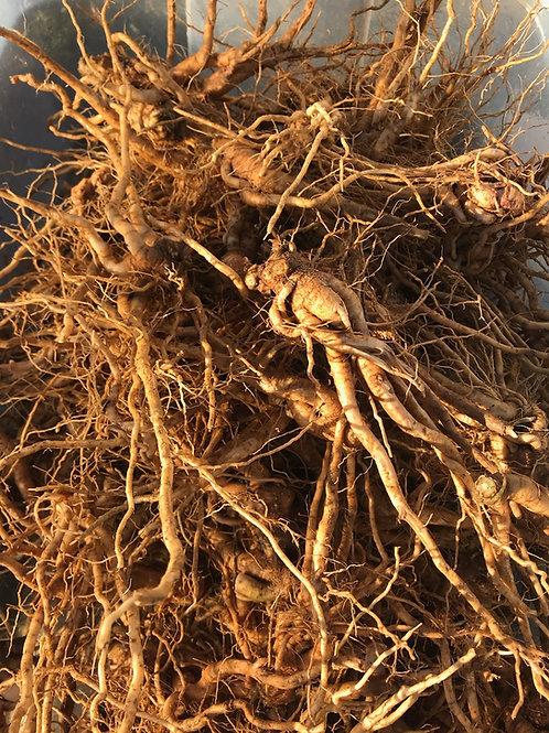 Ashwagandha Root - Withania somnifera