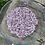 Thumbnail: Lilac Flower Essence