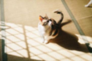 reDSC00148.jpg