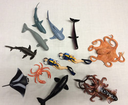 Sea creatures and divers