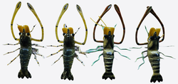 Plastic shrimp with spring coiled pereopods