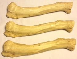 Custom Build Tibia bones